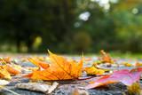 Fototapety Herbstblätter auf der Straße