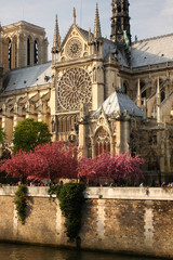 Paris, Notre Dame cathedral with blossomed tree