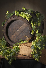 Still-life with hops