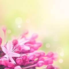 Beautiful abstract floral background with pink flower buds