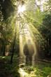 Erscheinung im Wald