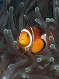 Fototapeta nurkować - podwodne - Ryba