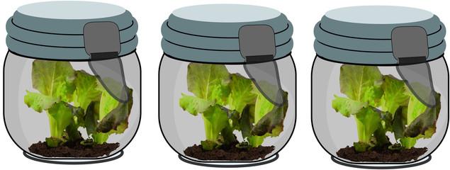 insalata in serra