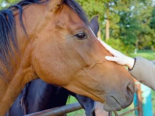 Streichelpferd