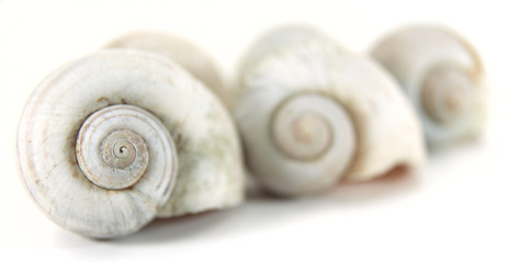 Close up row of nautilus shell.