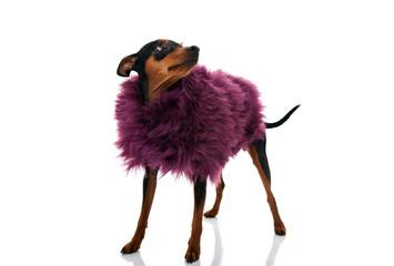 cute fashion little dog