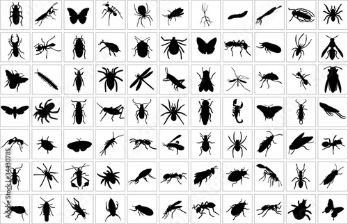 collection of bugs - vector - 34430785