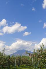 岩木山と青森りんご