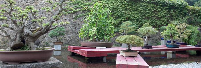 Panorama jardin japonais (bonzai)