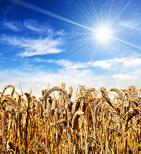 sun and wheat