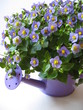 lila Kanne mit Blumen