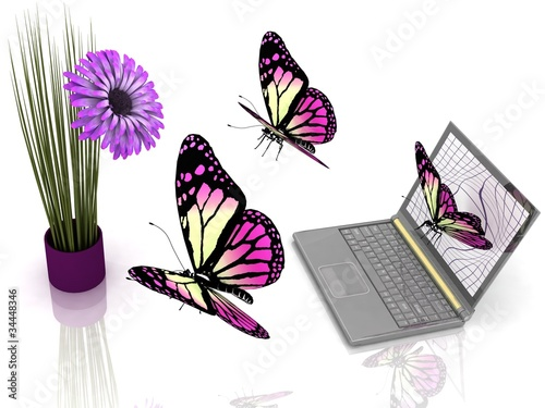 Butterflies take off from laptop to the flower