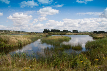 marshy lake with blue sky and clouds