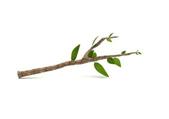 branche 2