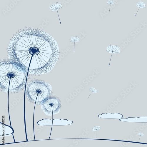 dandelion on gray © vberla