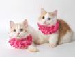 ピンクのレイをかけた2匹の猫(マンチカン)