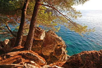 summer landscape with Adriatic Sea and pine tree
