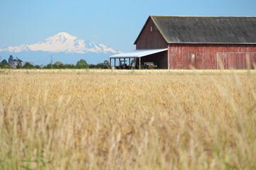 Mount Baker, Barn, Hay Field,