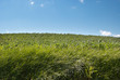 erba e cielo su una collina in Toscana