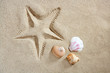 beach sand starfish print shells and sea snail summer