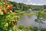 Fototapeta zielony - drzewo - Ogólny widok