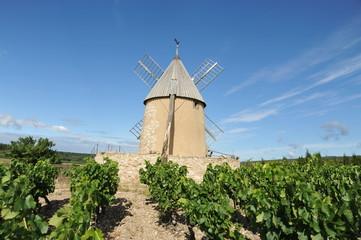 Moulin à vent dans la vigne