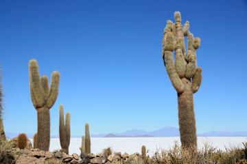 Cactus géants - Salar d'Uyuni