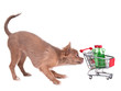 Chihuahua puppy with shopping cart bying two bottles of alcohol