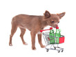 Chihuahua puppy with shopping cart bying some alcohol drinks