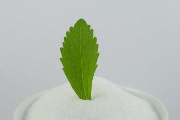 Stevia and sugar / Stevia und Zucker