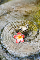 Ceramic frog and beautiful flower