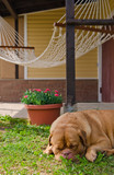 Weekend - garden house, hammock and guard dog poster