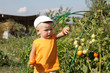 Boy in tomatoes garden