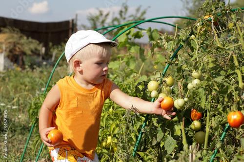 Boy takes tomato
