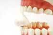 gesunde zähne #24