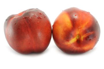 Two wet nectarines