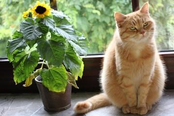 Katze mit Sonnenblume auf Fensterbank
