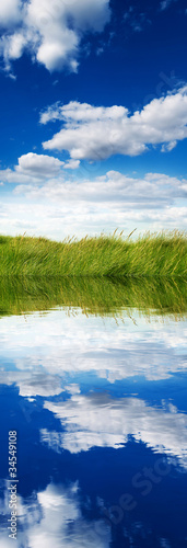 grass meadow reflection