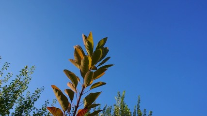 foglie albero alba