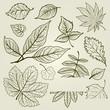 Vector set of autumn leafs illustration
