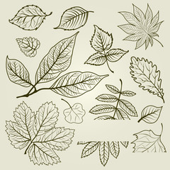 Vector set of autumn leafs illustration
