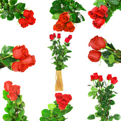 Beautiful collage of red roses .  Isolated.