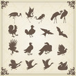 Vintage vector birds illustrations