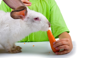 Boy gives the rabbit a carrot