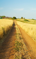 country road through wheat field