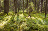 sunlight in the summer forest