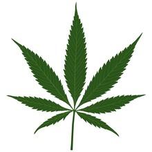 Liści konopi - marihuany (konopi) Ilustracja