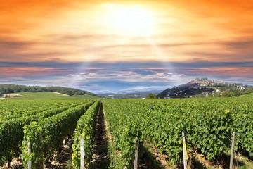 Coucher de soleil sur un vignoble