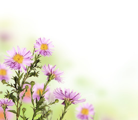 Beautiful flower background with free space for text