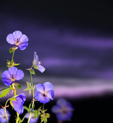 Beautiful flower background with dark clouds background